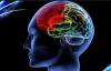 机器学习揭示了人类大脑的新见解